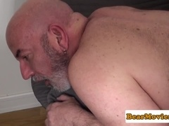 Pierced polar bear anally pounded