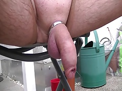 hanging cock