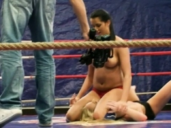 Pussylicking kitten wrestles in a boxing ring